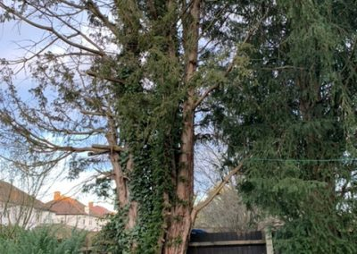 Blackheath tree surgeons