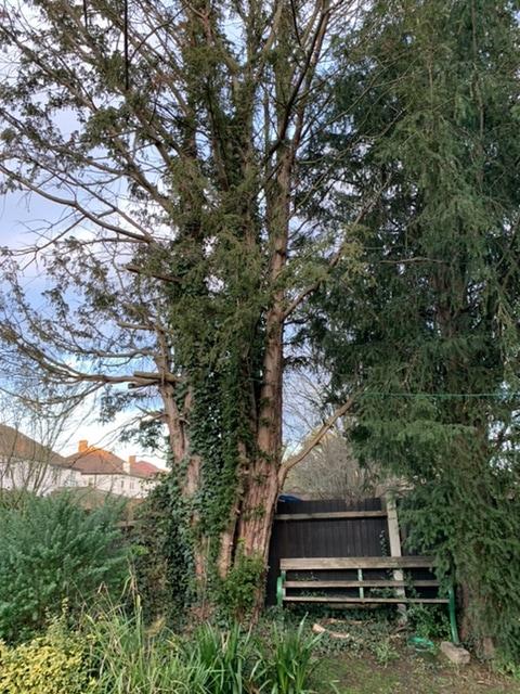 Paradise tree surgery